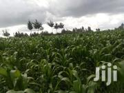 6 Acres for Sale in Nyandarua Mbuyu | Land & Plots For Sale for sale in Nyandarua, Central Ndaragwa