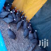 Plugged One On One | Livestock & Poultry for sale in Kirinyaga, Wamumu