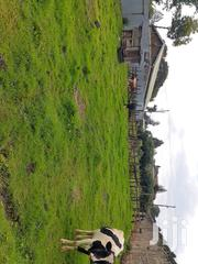 Plot for Sale 3 Points | Land & Plots For Sale for sale in Kericho, Ainamoi
