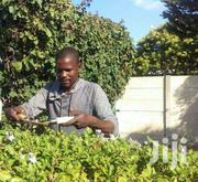 Trustworthy Gardener/Landscaping/Farm Workers And Houseboys Available | Landscaping & Gardening Services for sale in Nairobi, Parklands/Highridge