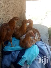 Kienyeji Chicken At Affordable Prices. | Livestock & Poultry for sale in Kakamega, Sheywe
