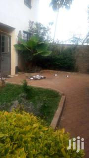 Duck And Ducklings And Ducks Chicks | Livestock & Poultry for sale in Homa Bay, Mfangano Island