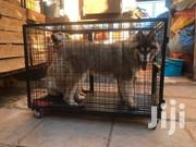 Dog Cage With Wheels | Pet's Accessories for sale in Nairobi, Kahawa