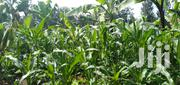 Selling a Land in Bungoma North County, | Land & Plots For Sale for sale in Bungoma, Ndalu/ Tabani