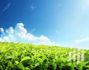 7000 Acres on Sale in Kericho | Land & Plots For Sale for sale in Kericho, Chepseon