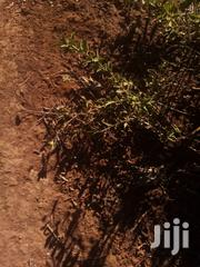 10 Acres in Muraru Area | Land & Plots For Sale for sale in Embu, Mbeti North