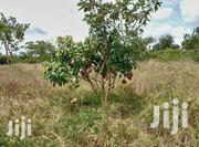 Commercial Land on Sale | Land & Plots For Sale for sale in Embu, Mbeti North