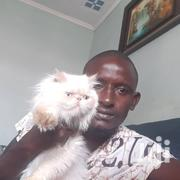 Adult Male Purebred Himalayan | Cats & Kittens for sale in Kiambu, Gitothua