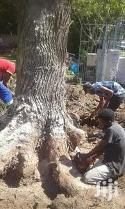Dangerous Tree Cutting, Tree Trimming, Tree Felling- 100% Satisfaction | Landscaping & Gardening Services for sale in Nairobi, Westlands