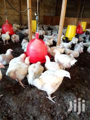 Ready Prepared Broilers Chicken For Sale. | Livestock & Poultry for sale in Nairobi, Kahawa