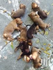 Baby Male Mixed Breed | Dogs & Puppies for sale in Mombasa, Bamburi