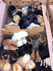 Day Old To 1 Month Old Kuroiler Chicks | Livestock & Poultry for sale in Nairobi, Mihango