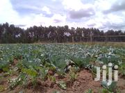 Fresh Organicaly Grown Cabbages   Meals & Drinks for sale in Nyandarua, Karau