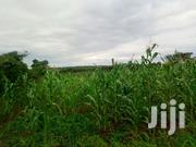 4 Acres (Emergency Sale). | Land & Plots For Sale for sale in Siaya, West Sakwa (Bondo)