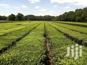 Kericho 5,000 Acres With Tea Plantation | Land & Plots For Sale for sale in Kericho, Chepseon
