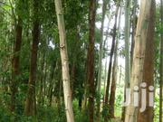 Trees For Sale | Building Materials for sale in Embu, Kyeni South