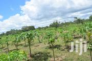 Prime Plots In Malindi! | Land & Plots For Sale for sale in Kilifi, Malindi Town