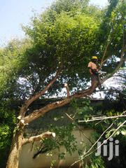 Hire Best Tree Removal Service,Tree Cutting & Pruning Service.Call Now | Landscaping & Gardening Services for sale in Nairobi, Kilimani