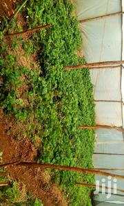 Strawberry Seedlings | Feeds, Supplements & Seeds for sale in Kiambu, Gitaru