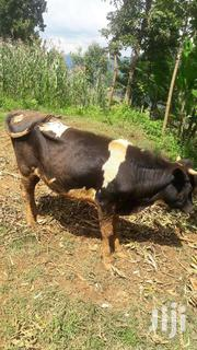 A Cow Farmer | Livestock & Poultry for sale in Kisii, Bobasi Boitangare
