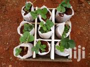 Strawberry Plants | Feeds, Supplements & Seeds for sale in Kiambu, Thika