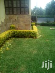 Landscaping | Landscaping & Gardening Services for sale in Nairobi, Karen