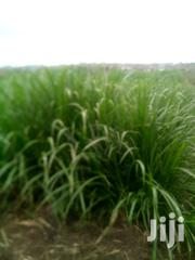 Nappier Grass | Feeds, Supplements & Seeds for sale in Nairobi, Njiru