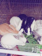 Rabbit /Bunny | Other Animals for sale in Nairobi, Nairobi West