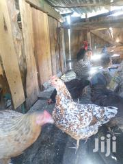 Six Month + Kienyeji Chicken | Livestock & Poultry for sale in Nakuru, Mbaruk/Eburu