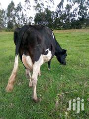 Incalf Due In 1month | Livestock & Poultry for sale in Nyandarua, Magumu