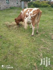 Ayrshire Incalf 6months | Livestock & Poultry for sale in Nyandarua, Magumu