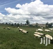 Kisaju 50X100 Plots for Sale With Titles | Land & Plots For Sale for sale in Kajiado, Kaputiei North