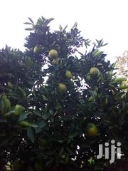 Orange Fresh Fruits | Meals & Drinks for sale in Murang'a, Ithanga