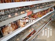 Galvanized Chicken Cages For Layers   Farm Machinery & Equipment for sale in Nairobi, Githurai