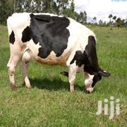 Fresian Dairy Cow | Livestock & Poultry for sale in Nyandarua, Nyakio