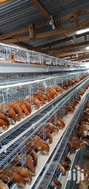 Imported Chicken Cage   Farm Machinery & Equipment for sale in Nairobi, Kasarani