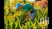 Professional Lawn Care Service | Landscaping & Gardening Services for sale in Nairobi, Karen