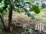 Half an Acre in Kithimu | Land & Plots For Sale for sale in Embu, Mbeti North