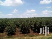 302 Acres Kiganjo Rd 7m Per Acre With  Factory And Fully Mature Coffee   Land & Plots For Sale for sale in Kisii, Masimba
