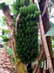 Selling Cooking And Ripening Banana | Meals & Drinks for sale in Nyamira, Nyansiongo