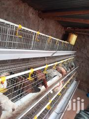 Battery Chicken Cages   Farm Machinery & Equipment for sale in Nairobi, Kasarani