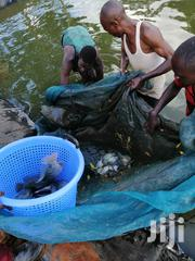 Fish Supllier | Fish for sale in Nairobi, Lavington