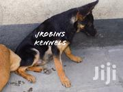 Baby Male Purebred German Shepherd | Dogs & Puppies for sale in Nairobi, Embakasi